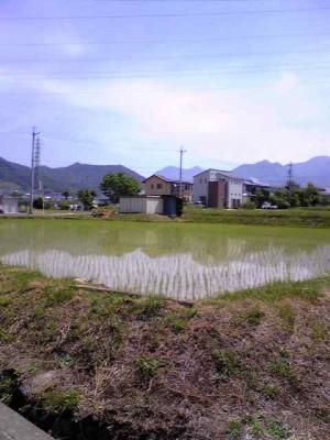 上田市の田植え