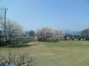 千曲荘グランドの桜3