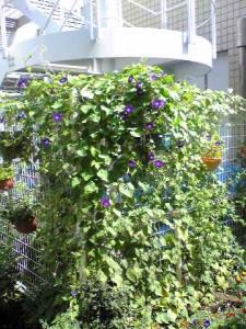 種から育てた花たち